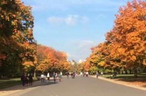 Efterår Kensington Gardens