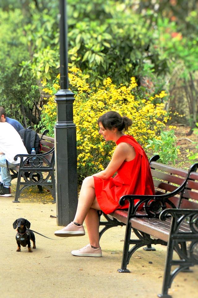 Red show walk, park